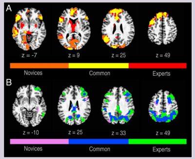 fMRI creativity novice vs expert
